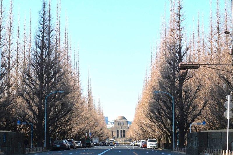 秋には黄金色に輝く「明治神宮外苑」のイチョウ並木
