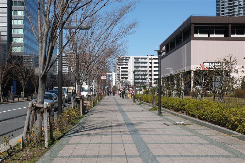 「スーパービバホーム 豊洲店」脇の並木道