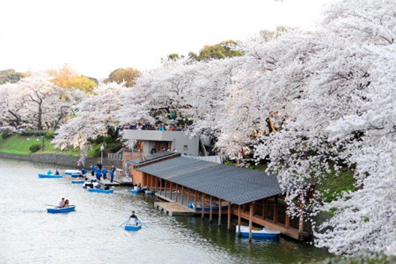 「千鳥ケ淵公園」のボート乗り場