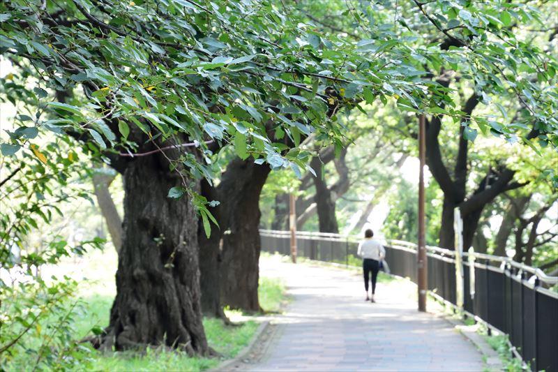 「外濠公園」(飯田橋駅付近)