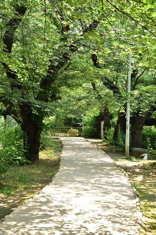 外濠公園(六番町付近)
